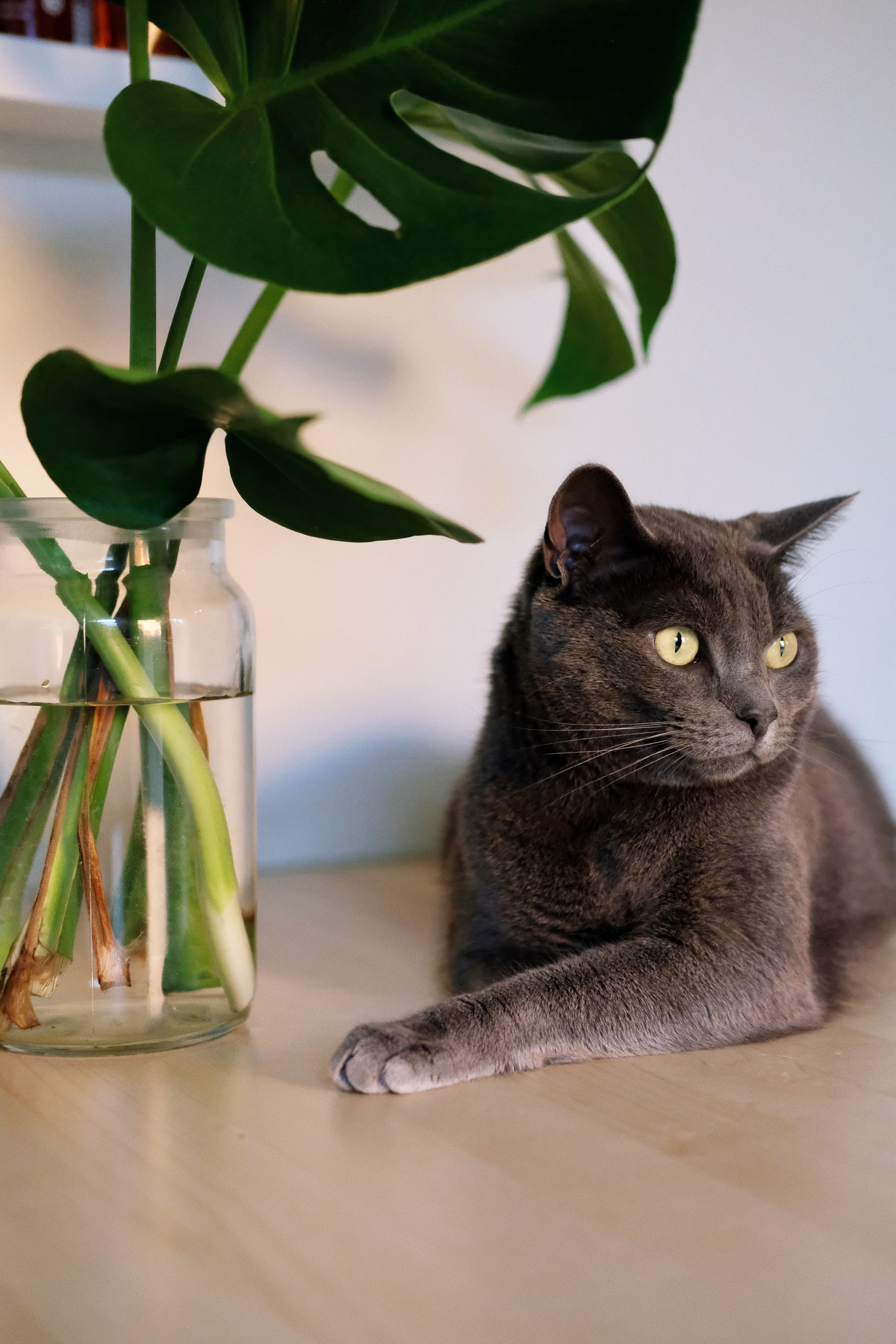 houseplants safe for pets