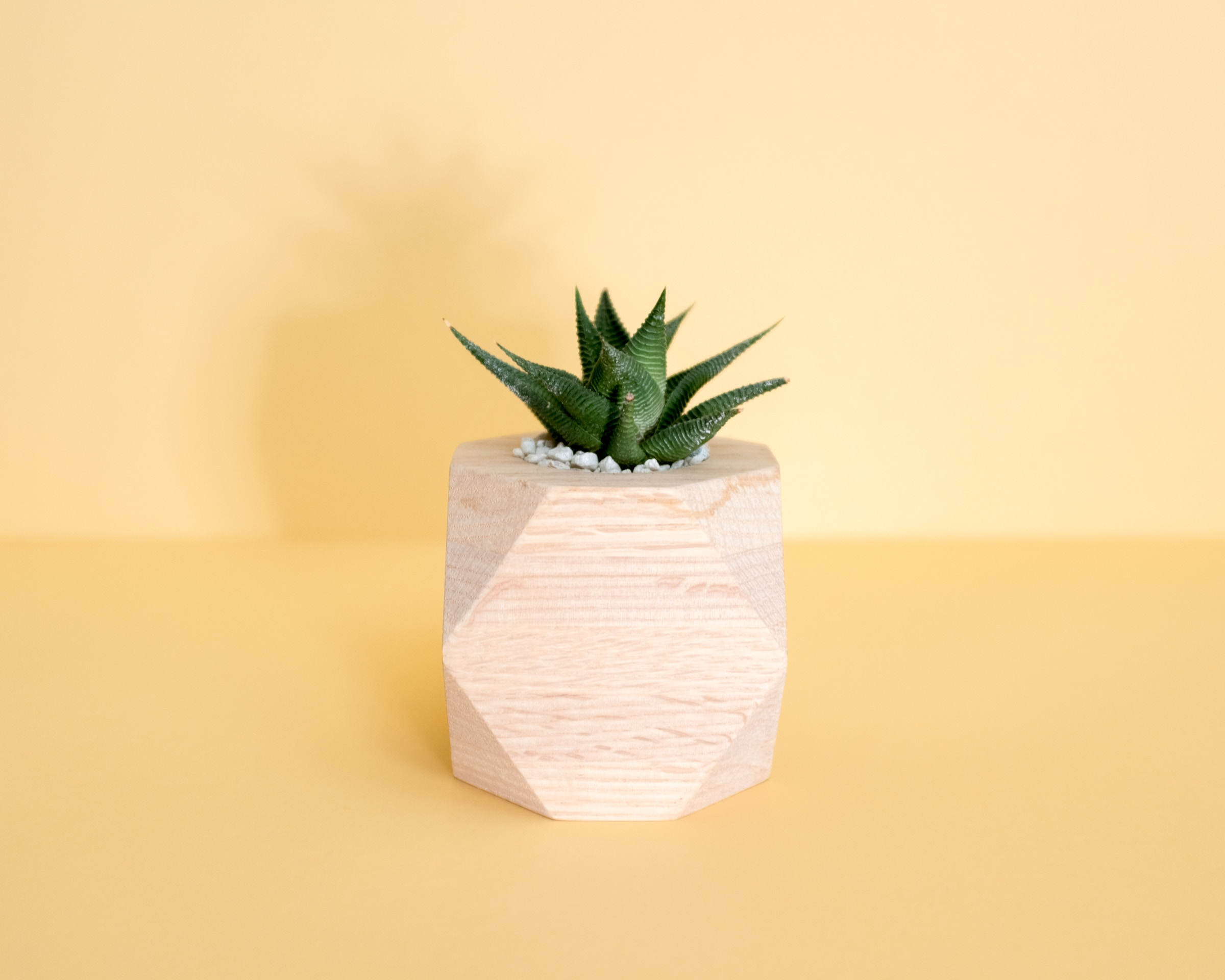 are air plants safe for pets