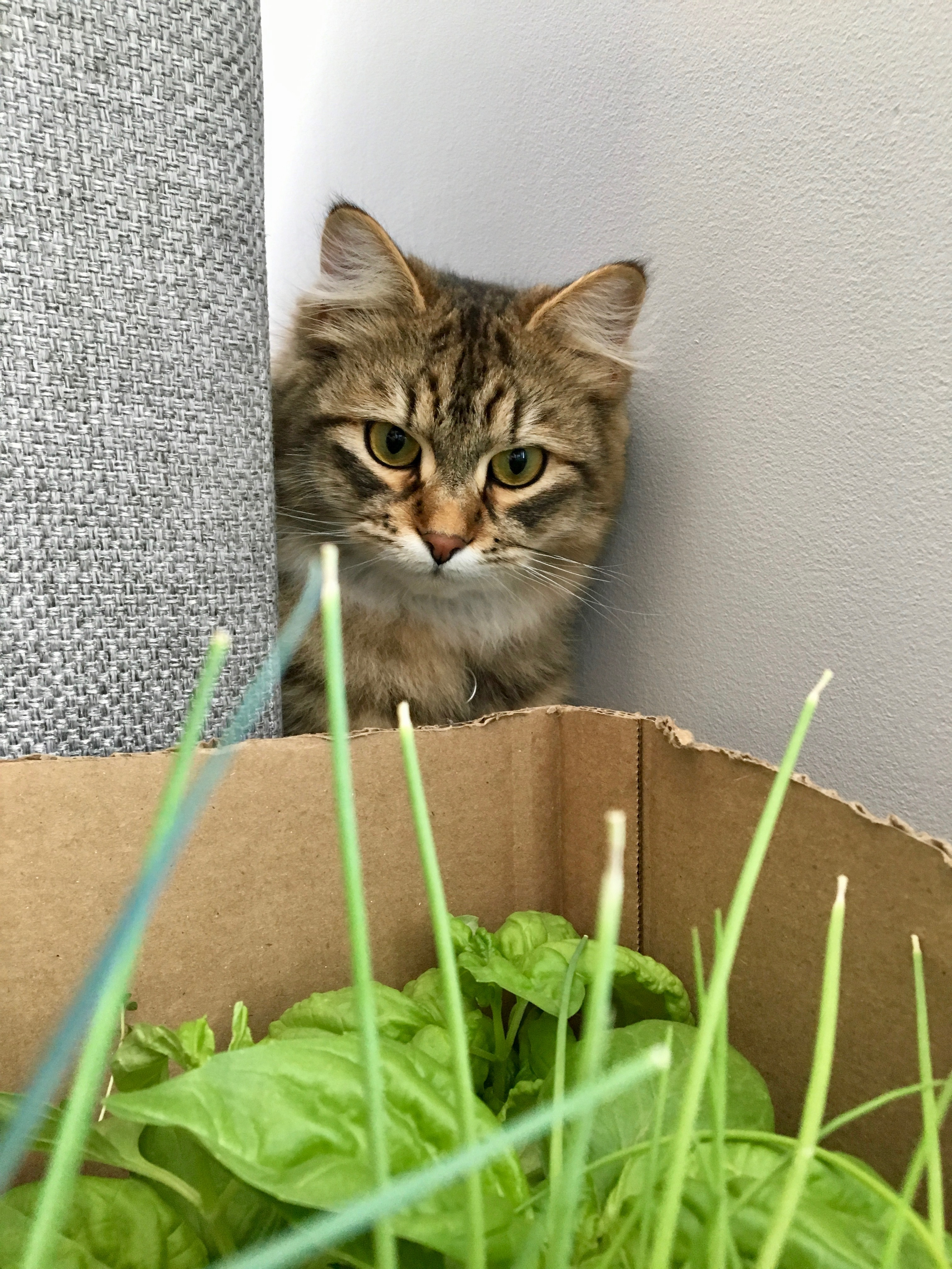 which plants are safe for pets