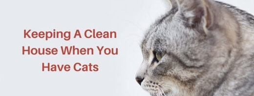 tips for cleaning your house when you have cats